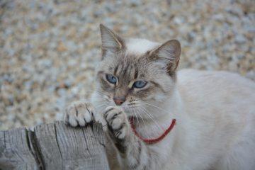 krallen pflegen bei katze