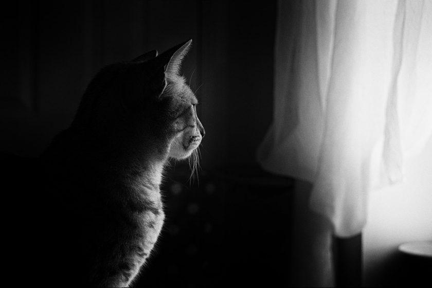 kippschutz katze