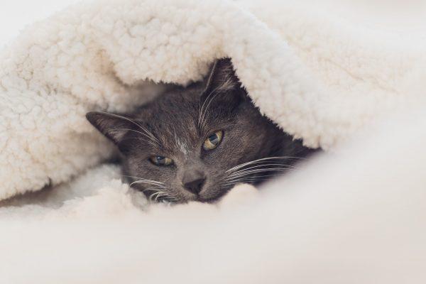 katzengesundheit im winter